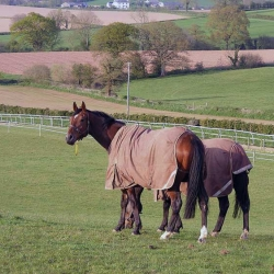 The retired Lord Kintyre babysitting Starvin Marvin in the paddocks overlooking the gallops.