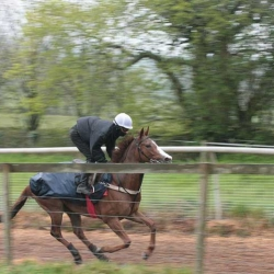 Pat Millman on the gallops