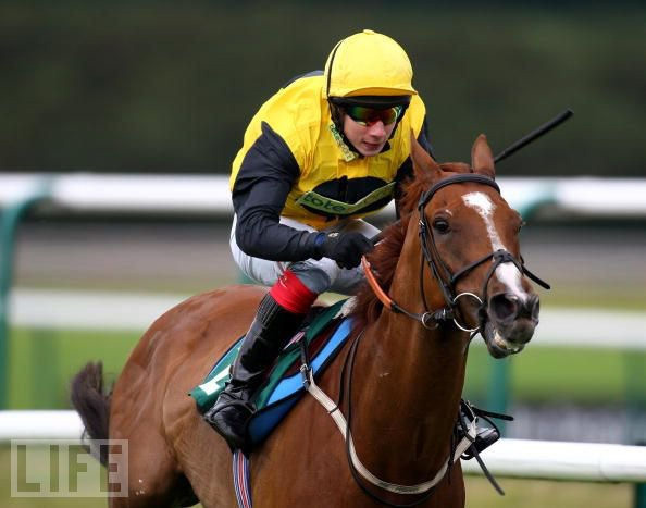 Olimpo_aug08_lingfield